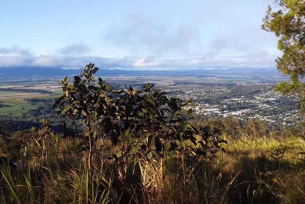 Mt Baldy Bushwalk