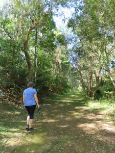 Peterson creek walking track